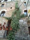 134-Assisi.jpg
