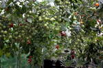 Greenhouse-10.JPG