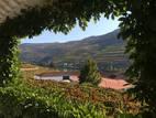 065-Quinta do Bomfim.jpg