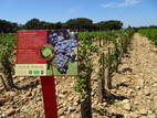 146-Chateauneuf.JPG