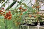 Greenhouse-11.JPG