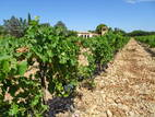 126-Chateauneuf.JPG