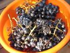 Grapes-04.JPG