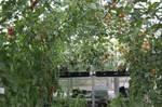 Greenhouse-09.JPG